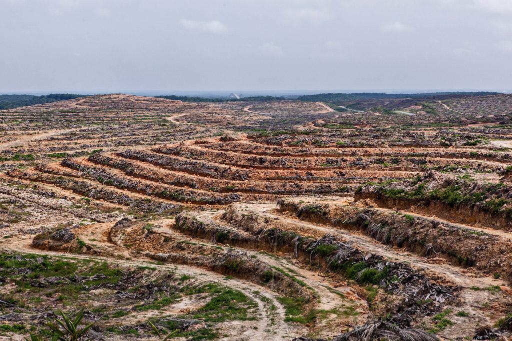 piantagioni-palma-olio