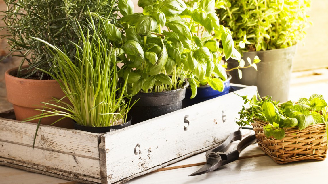 piante aromatiche in vaso come si coltivano