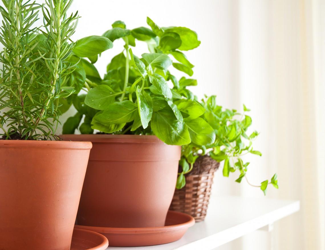 Vasi Per Piante Aromatiche.Piante Aromatiche In Vaso Come Si Coltivano