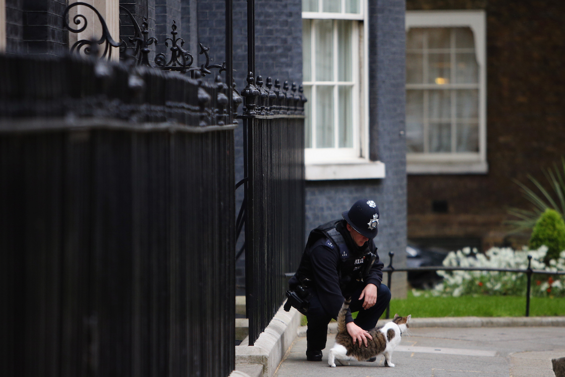 policeman cat downing street