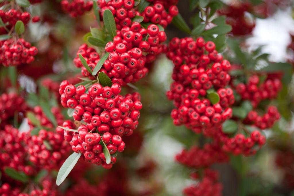 via col vento: come trarre il meglio dal giardino in autunno ... - Come Rendere Bello Il Giardino