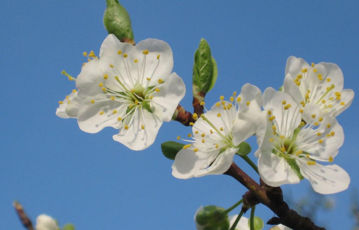 Lapp per riconoscere piante e fiori si chiama Plantnet