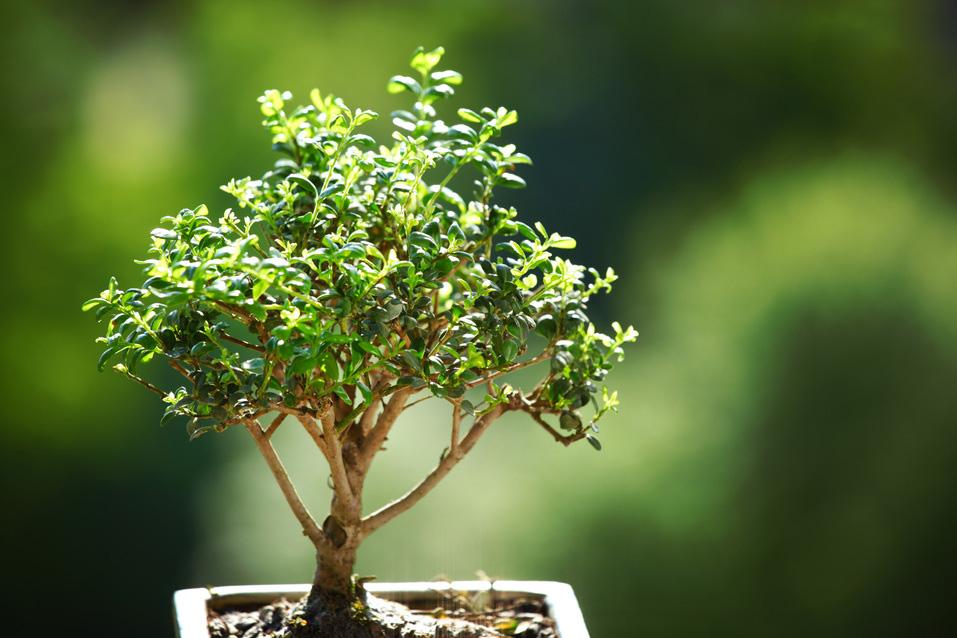 riflessologia-plantare-1
