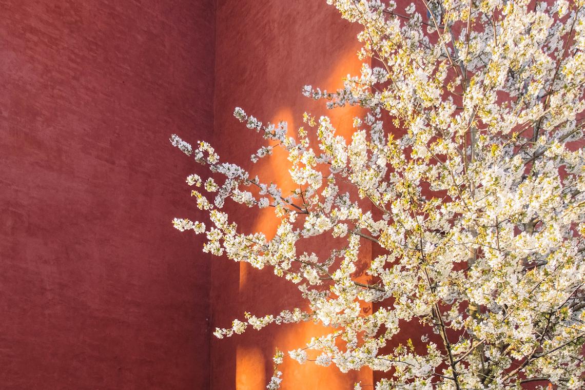 Feng Shui Colori Ufficio : Cosè il feng shui. regole e colori per arredare casa camera da