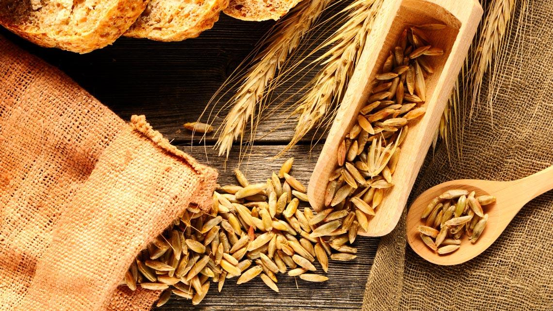 Segale: come si cucina ricette e proprietà lifegate