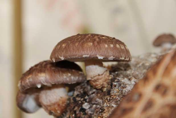 Come liberarsi da un fungo di piede su una gamba