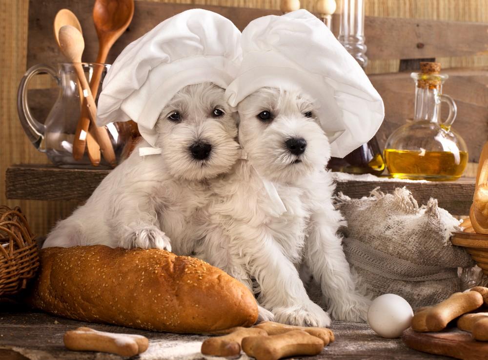 Molto Secco o umido, come scegliere il cibo per cani e gatti | LifeGate ZP09