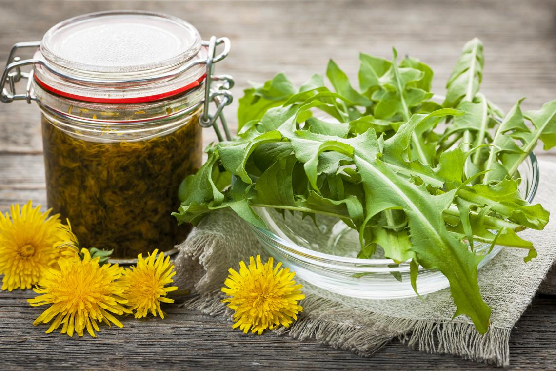 erbe selvatiche in cucina propriet e uso