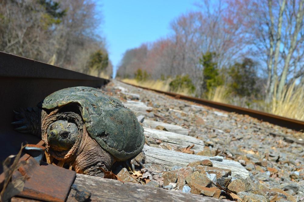Il giappone costruisce tunnel per le tartarughe per for Stagno artificiale per tartarughe