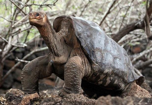 il ritorno della tartaruga gigante lifegate