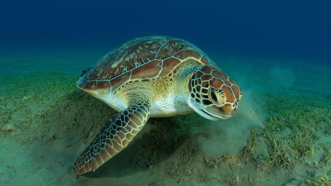 proteggiamo le tartarughe marine anche nelle acque