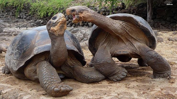 Il ritorno della tartaruga gigante lifegate for Tartarughe grandi