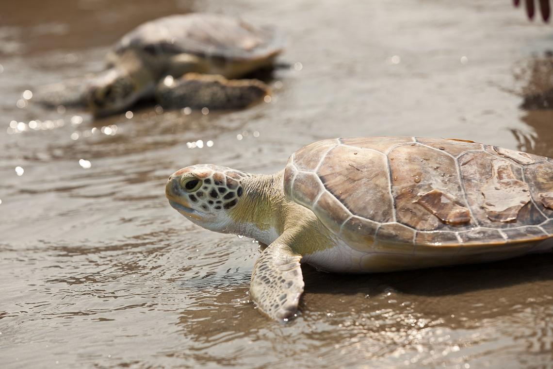Le tartarughe non prendono il sole e questo un problema for Temperatura tartarughe