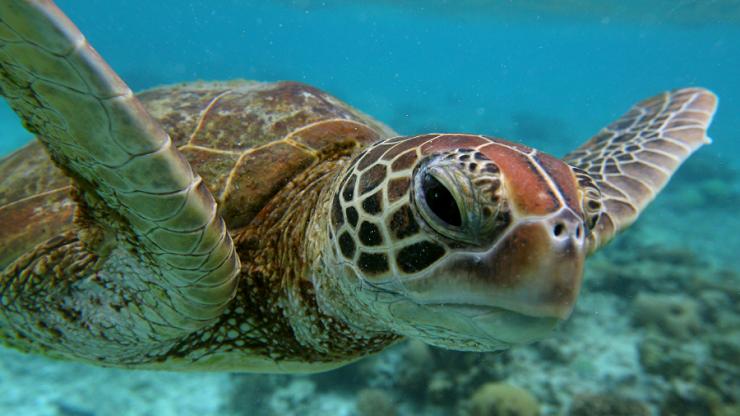 Il 16 giugno la giornata mondiale delle tartarughe for Tartarughe marine letargo