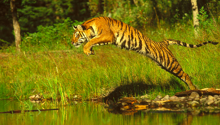 bangla corre