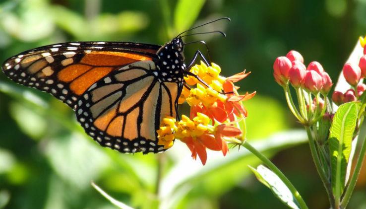 7 case delle farfalle da vedere lifegate for Immagini farfalle per desktop