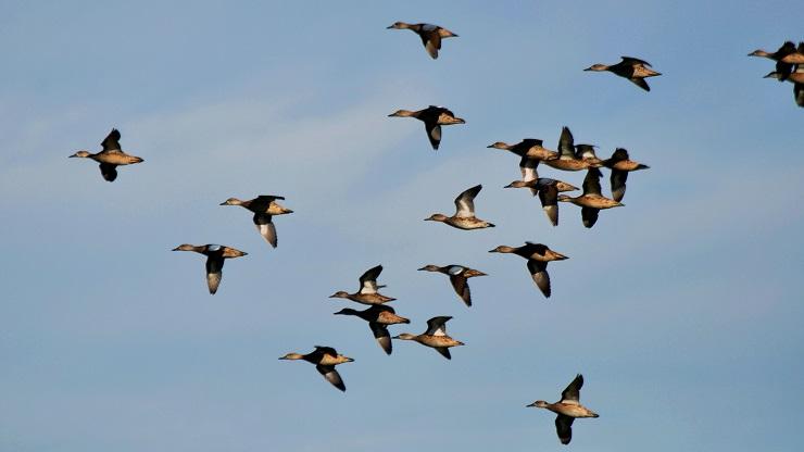 New york spegne le luci per aiutare gli uccelli migratori - Uccelli che sbattono contro le finestre ...