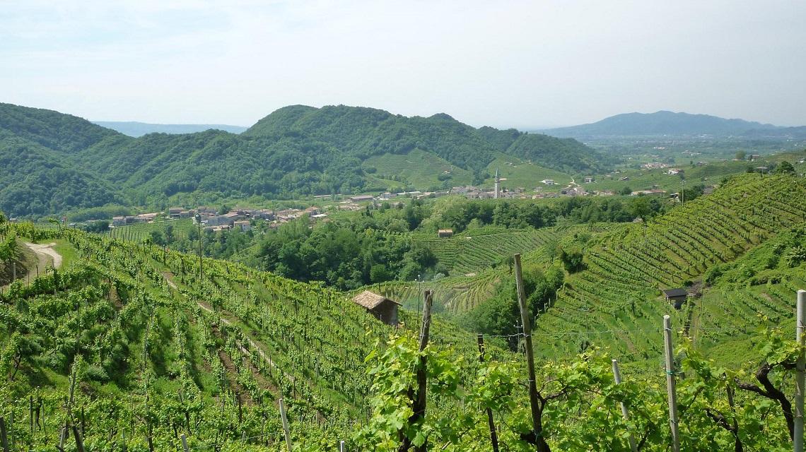 Il Veneto è sempre più verde, l80 delle aziende è sostenibile ...
