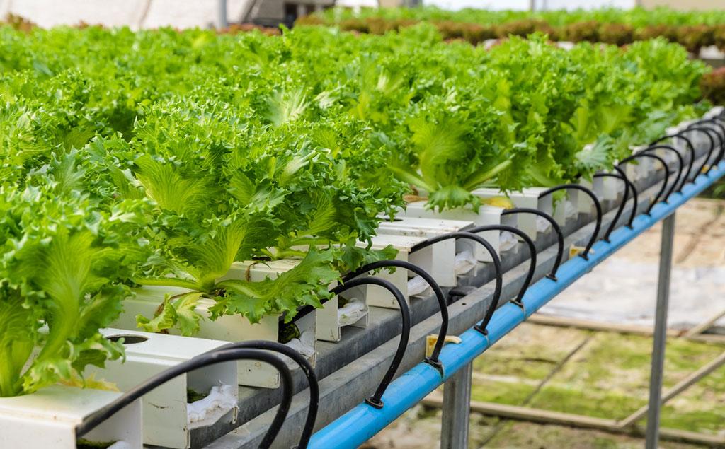 Vertical Farm Le Serre Che Educano A Mangiare Bene Lifegate
