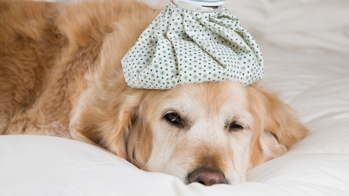 cane vomito diarrea minzione frequente