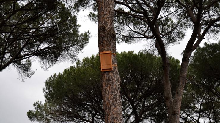 Contro le zanzare rimedi naturali lifegate - Rimedi contro le zanzare in giardino ...